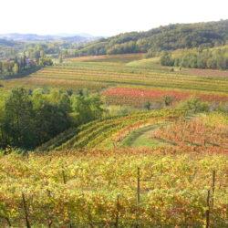 Bruna Flaibani, un misterioso ed intimo dialogo con il vino