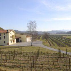 Collio Chardonnay particella 3, ottimo cru di Ronco Blanchis