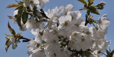 La primavera in Friuli
