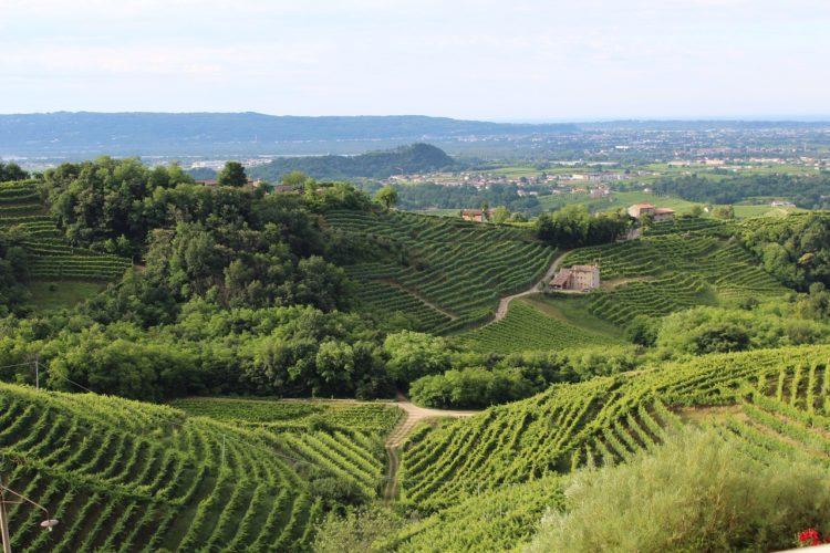 L'Associazione Nazionale delle Città del vino propone agevolazioni fiscali per i viaggi in Italia