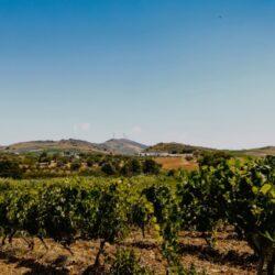 Vini Tola, dalla Sicilia il vero sapore del territorio
