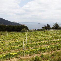 Le Sughere, scoprire l'Elba attraverso i suoi vini antichi